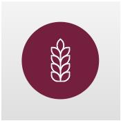 Sequoia flavour icon